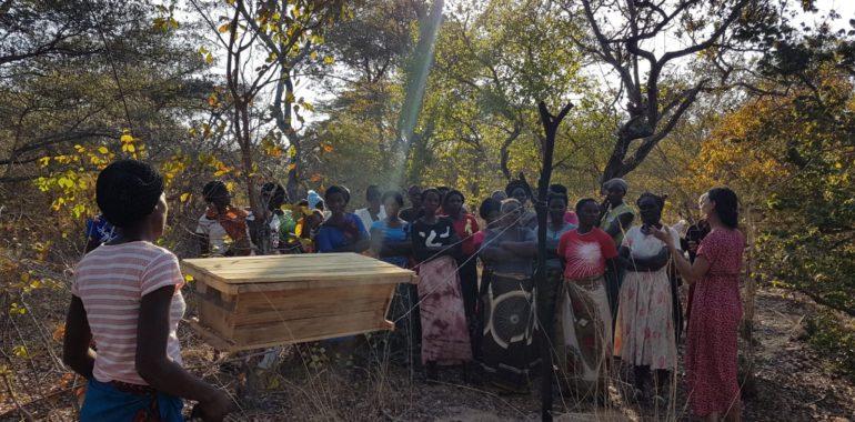 Création d'un rucher école pour la formation à l'apiculture des femmes des communautés de Musungwa